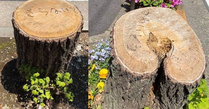 切られた木.jpg