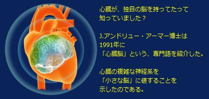 心臓脳.png