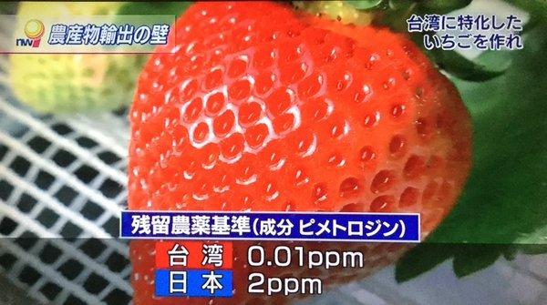 日本の苺.jpg