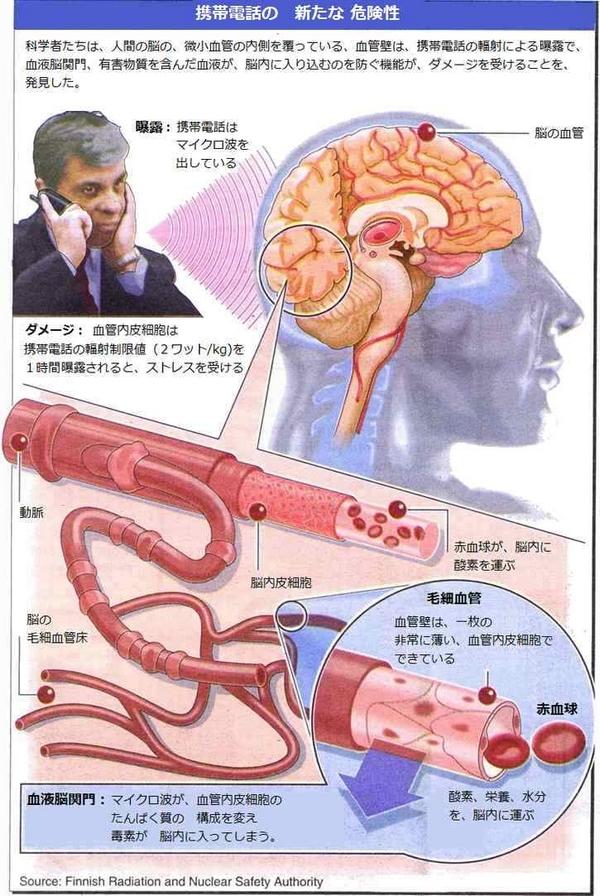 血液脳関門.jpg