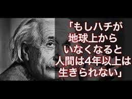 EinsteinBee.jpg