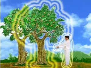 TreeAura.jpg