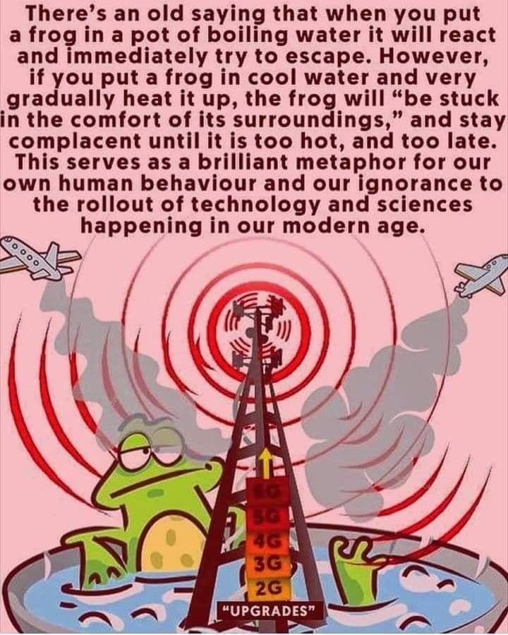 boiled frog.jpg