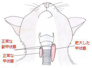 catThyroid_300x223.png