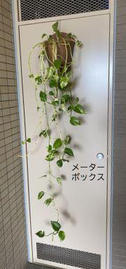 メーターボックスに植物